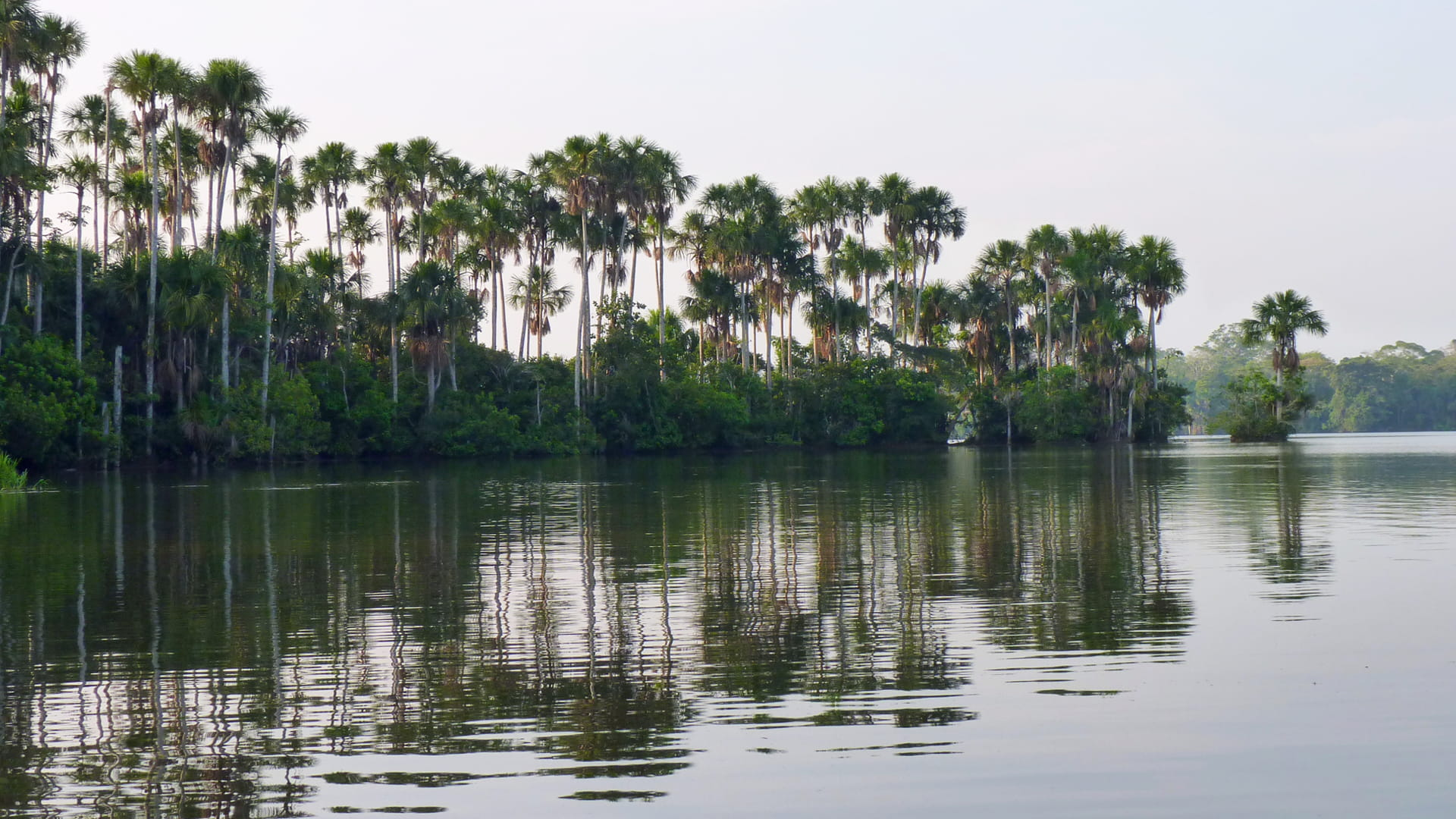 From the Amazon to the Andes- lake sandoval