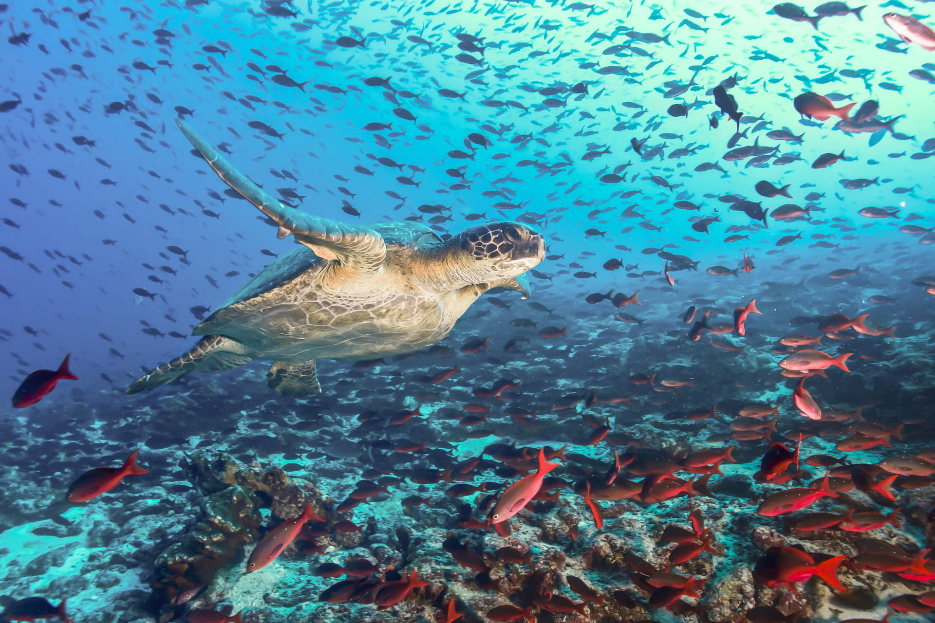 Peru Galapagos Vacation Packages